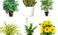 Ev İçinde Yetiştirilecek Faydalı Çiçekler