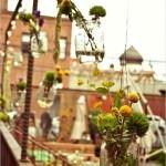 kavanozdan evinize dekoratif süsleme fikirleri - dekoratif balkon ciceklik kavanoz 150x150
