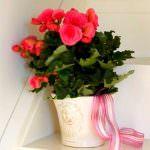 Evinizin İçine Renkli Bitkilerle Canlılık Getirin