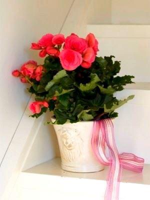 Evinizin İçine Renkli Bitkilerle Canlılık Getirin 5