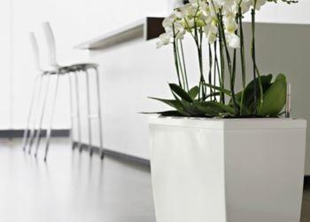 Modern Şık Saksı Ve Çiçek Seçimleri