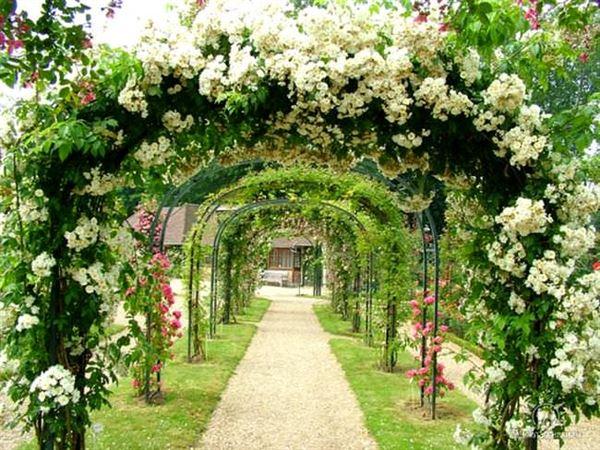 en güzel bahçe çiçekleri