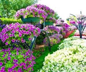 Bahçe Peysajı İçin Kullanabileceğiniz Bitkiler