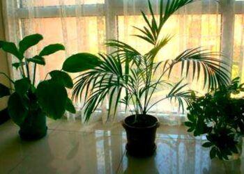evde-bitki-cicek-bakimi