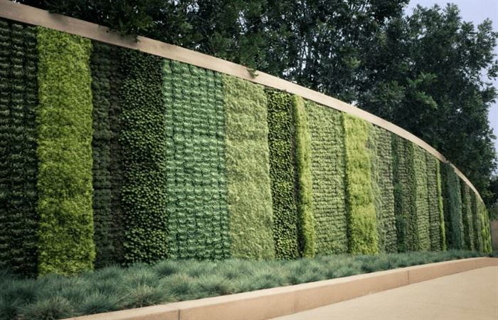 Duvarlar İçin Dikey Yeşillik Peysajı duvarlar İçin dikey yeşillik peysajı - bahce duvar bitki dekoru - Duvarlar İçin Dikey Yeşillik Peysajı