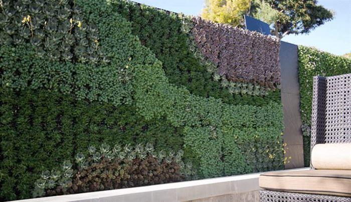 Duvarlar İçin Dikey Yeşillik Peysajı duvarlar İçin dikey yeşillik peysajı - bahce duvari bitki peysaji 1 - Duvarlar İçin Dikey Yeşillik Peysajı