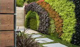 duvarlar İçin dikey yeşillik peysajı - bahce duvari bitki peysaji 255x150