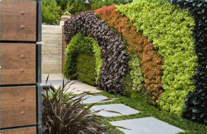 dış mekan duvar süsleme bitkileri