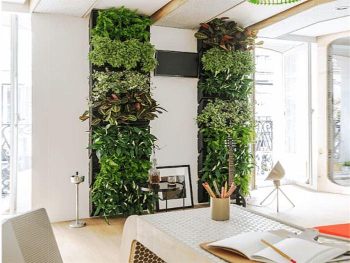 Duvarlar İçin Dikey Yeşillik Peysajı duvarlar İçin dikey yeşillik peysajı - feature living modulor min - Duvarlar İçin Dikey Yeşillik Peysajı