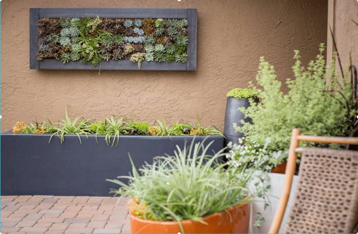 duvar süsleme bitkileri