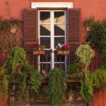 balkon çiçek örnekleri
