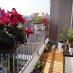 balkon çiçek modelleri