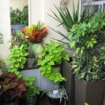 küçük balkon çiçek örnekleri