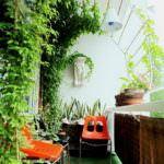 balkon yeşillikleri