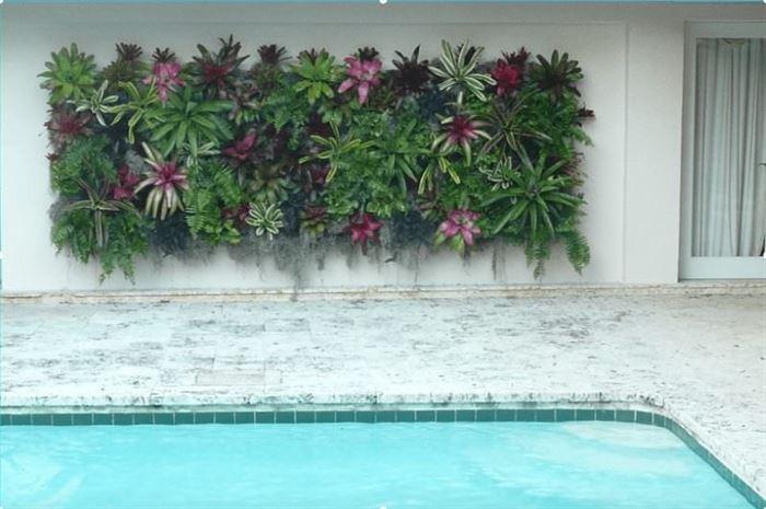 duvar süs bitkileri