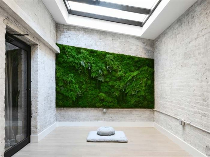 duvar için süs bitkisi