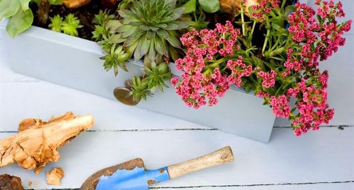 balkonda-bitki-yetistirmek