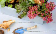 Balkonda Ve Evde Bitki Yetiştirmek İçin En İyi Zaman