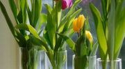 Cam Vazoda Oda İçinde Yeşillik Yetiştirmek