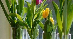 Cam Vazoda Oda İçinde Yeşillik Yetiştirmek 1