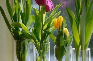 Cam Vazoda Oda İçinde Yeşillik Yetiştirmek 17