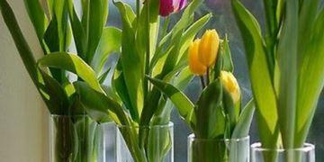 Cam Vazoda Yeşillik Yetiştirmek