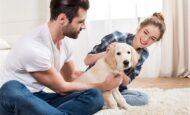 Evinizi Evcil Hayvan Bakmak İçin Hazırlama