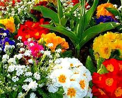 Kışın Bahçelerinize Ekeceğiniz Çiçekler 1