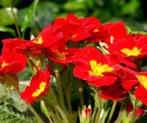 Kışın Bahçelerinize Ekeceğiniz Çiçekler