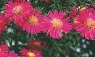 Bahçe Dekorunda Kullanacağınız Çiçekler