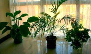 Evinizde Bitki Ve Çiçek Bakımı Nasıl Olmalı