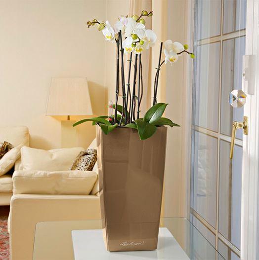 Modern Şık Saksı Ve Çiçek Seçimleri 1