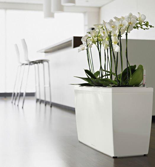Modern Şık Saksı Ve Çiçek Seçimleri 2