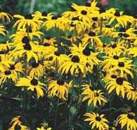 Bahçe Dekorunda Kullanacağınız Çiçekler 1