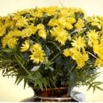 Yapay Çiçeklerle Yeşil Dünya Yaratın 4