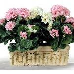 yapay Çiçeklerle yeşil dünya yaratın - yesillik2 150x150 - Yapay Çiçeklerle Yeşil Dünya Yaratın